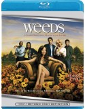 Blu-ray Weeds: Season 2